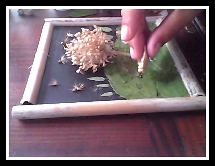 Crer un tableau vgtal en tapes - par guilllome - Hellocoton